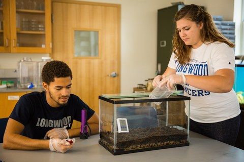 McCoy Williams '18 and Jessica Anderson '17 conduct an experiment involving poison dart frogs.
