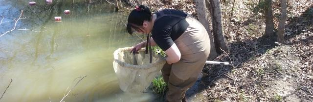 Jen Andrews '16 collects samples of organic matter from a pond near Lancer Park. Andrews, Julia Marcellus '16 and Dr. Ken Fortino recently presented their research at the annual meeting of the Association of Southeastern Biologists