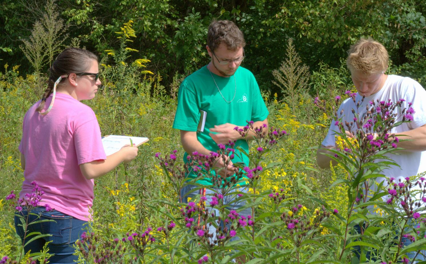 In an example of what BioBlitz volunteers will be doing, Longwood students Marti Furcron (from left), Aaron Austin and Alex Line measure soldier beetles